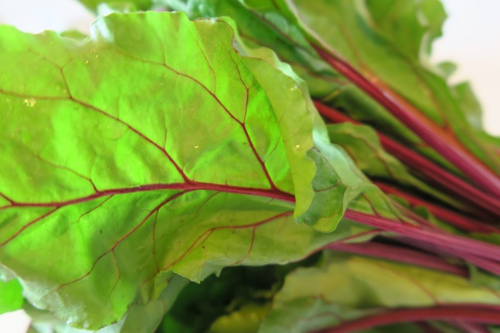 Fresh beet leaves in a bunch