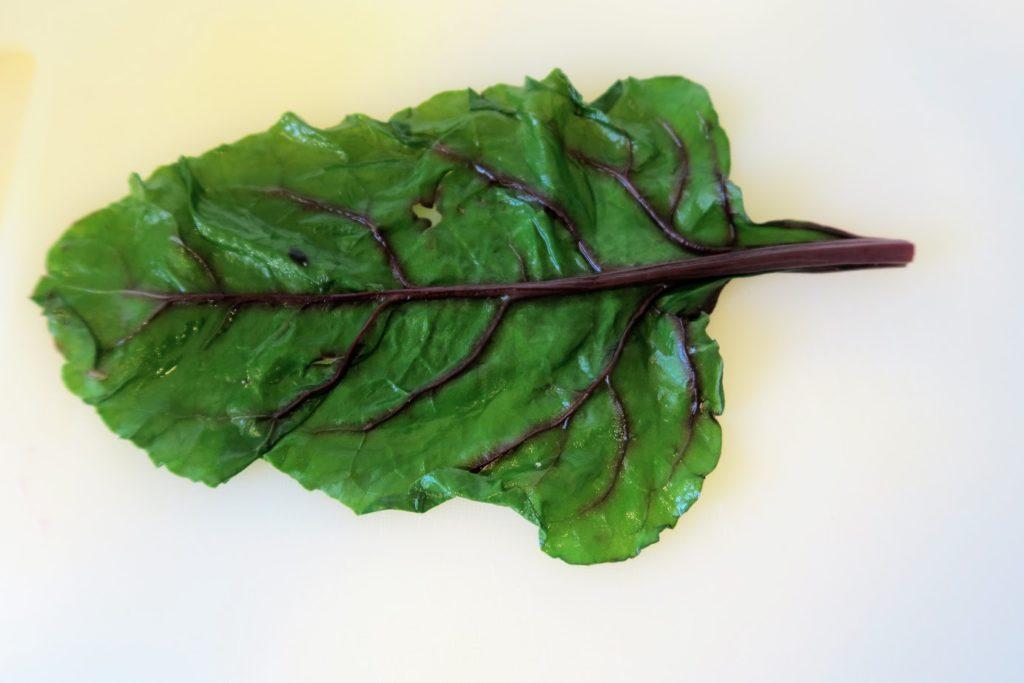 A lone beet leaf