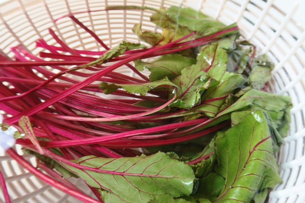 Beet greens with red stems soaking in a salad spinner