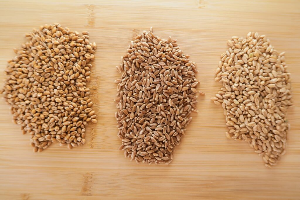 Flourist red spring wheat berries, red wheat berries and white wheat berries
